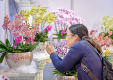 Anthurium and Orchids remain the main varieties represented at the Horti Asia.