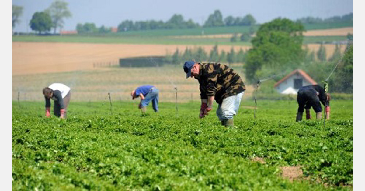 France: Foreign seasonal workers stuck at borders