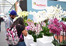 Phalaenopsis attracting the attention of many visitors.
