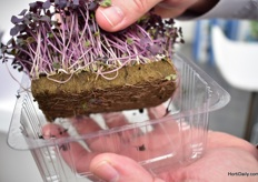 Oasis Grower Solutions recently introduced a foam to grow microgreens. It is clean, sterile and has the perfect PH balance for growing greens.