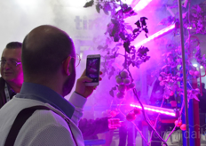 The LED-lights fog system gained a lot of attention