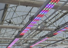 LED lights are increasingly widespread