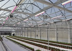 Greenhouses are kept extremely clean and in order