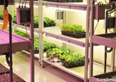 Plants in controlled conditions