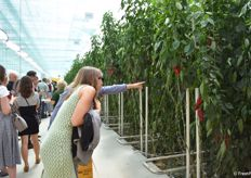 Every year 10.000 visitors visit the company for tours in the greenhouses