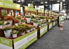 Many new varieties shown at the show