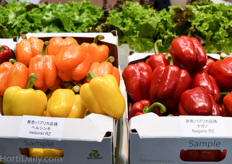 The blocky bell pepper is not common in Japan, but Rijk Zwaan's standard varieties like Nagano and Helsinki can be found inside Japanese greenhouses more and more.