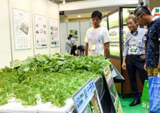 Japanese styrofoam hydroponic rafts for aquaponic cultivation.