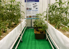 Hydroponic container system with perlite substrate from Espec.