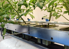 This kind of grow set ups really illustrate that the focus of domestic research and development in Japanese horticulture is very tech driven and the result of the plant output is not always the most important issue…