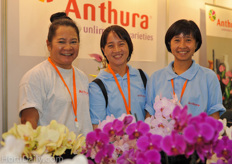 Nittaya, Saravan and Sasitorn where representing the anthurium varieties from Anthura.