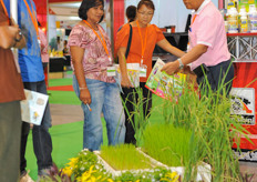 Rice is the most common crop in Asian horticulture. However, multiple governments are supporting farmers to switch over to alternative crops like peppers and flowers.