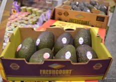 The new smaller 2 kg. box of avocados from Freshcourt targets foodservice and specialty stores who don't move enough avocados to buy a large double-layered box.